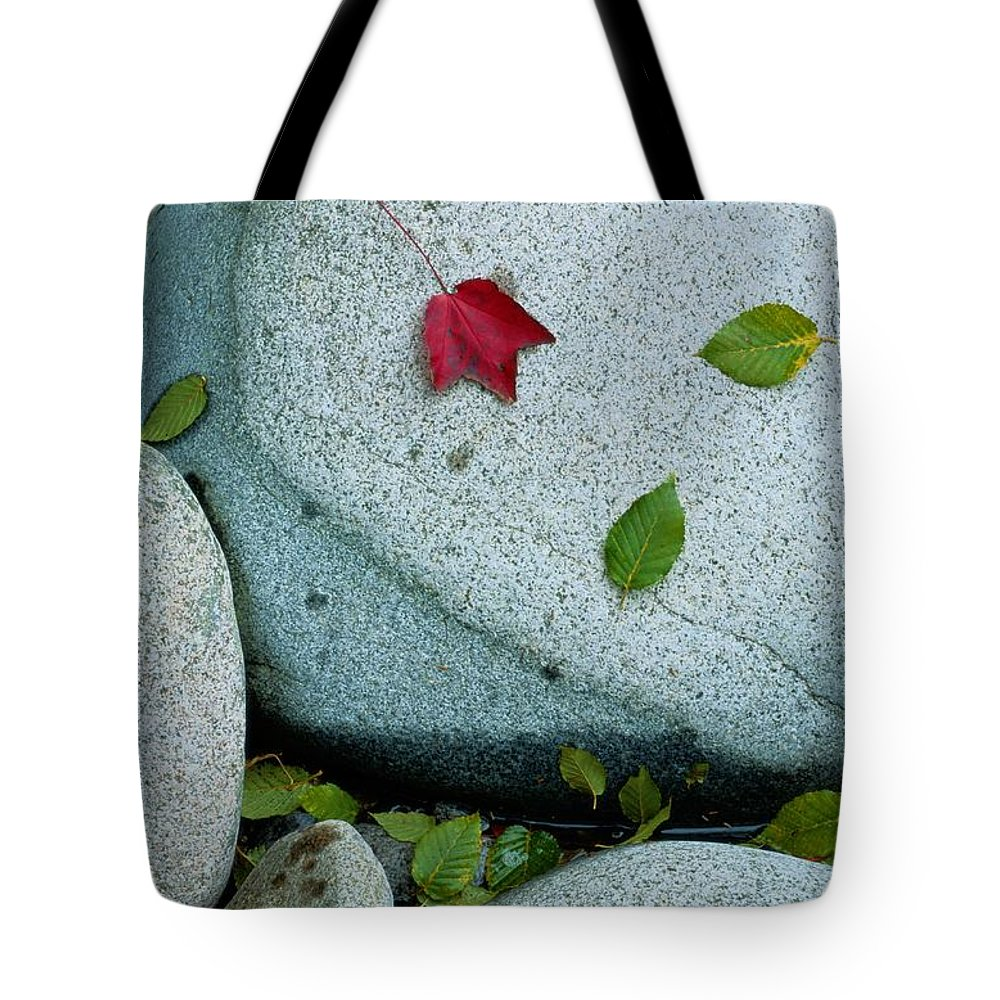 Plants Tote Bag featuring the photograph Three Fallen Leaves Lie On A Rock by Raymond Gehman