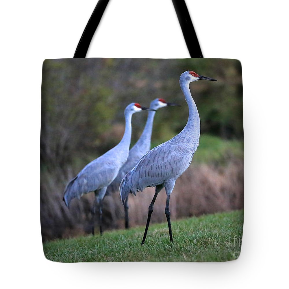 Sandhill Crane Tote Bag featuring the photograph Three Sandhills On The Hill by Carol Groenen