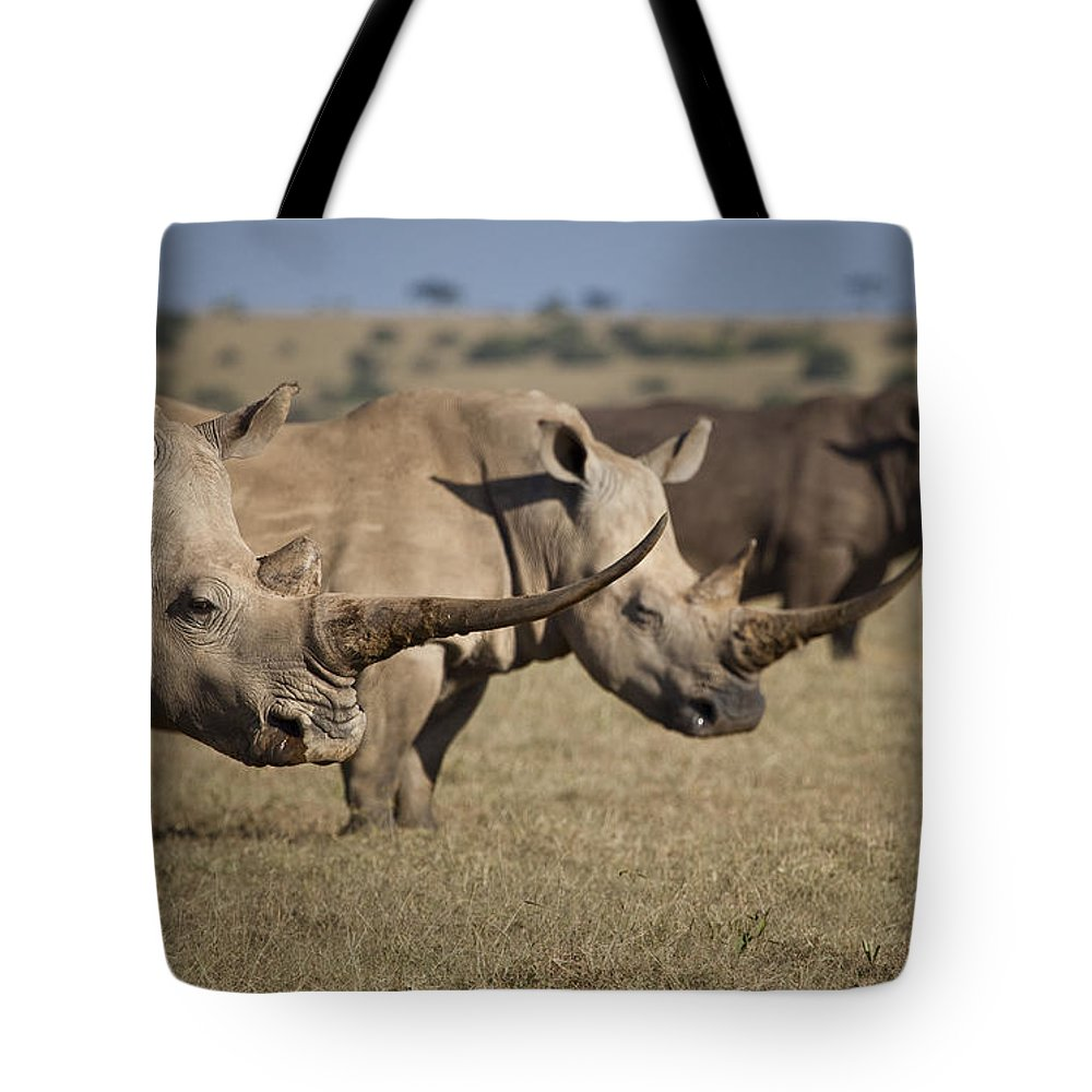 Photography Tote Bag featuring the photograph Three White Rhinos Line Up In Solio by Robin Moore