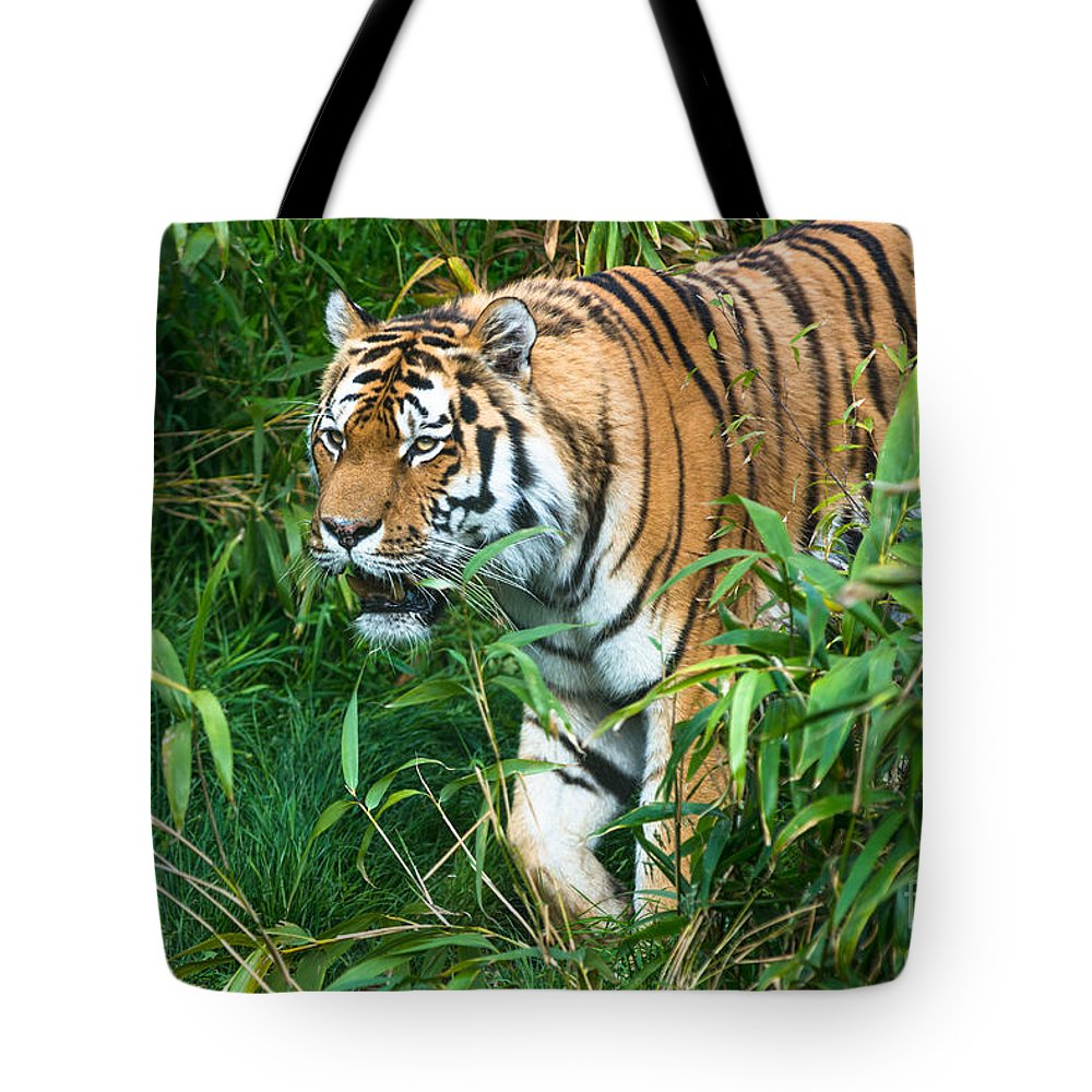 Tiger Tote Bag featuring the photograph Tiger by Andrew Michael