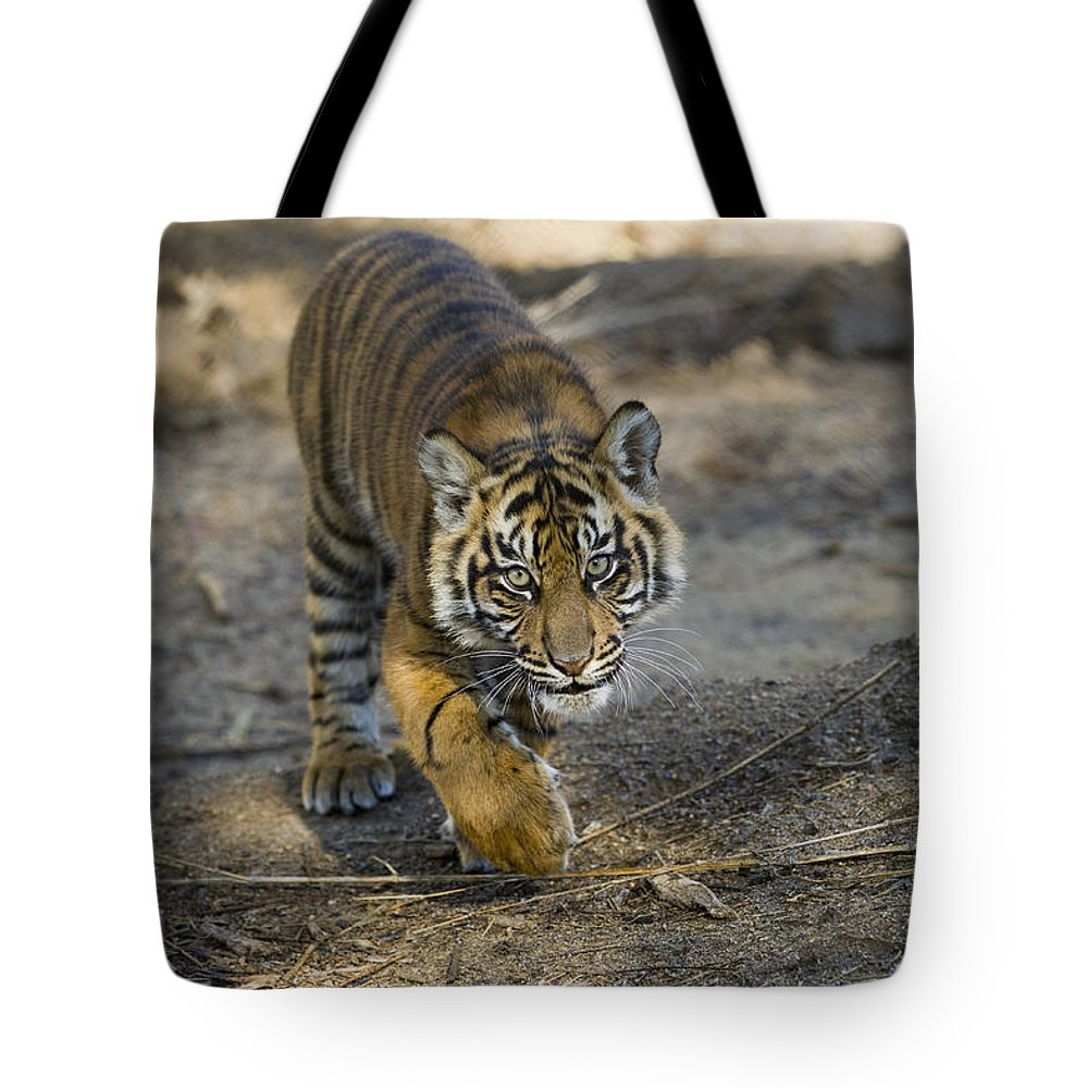 Mp Tote Bag featuring the photograph Tiger Panthera Tigris Cub, Native by Zssd