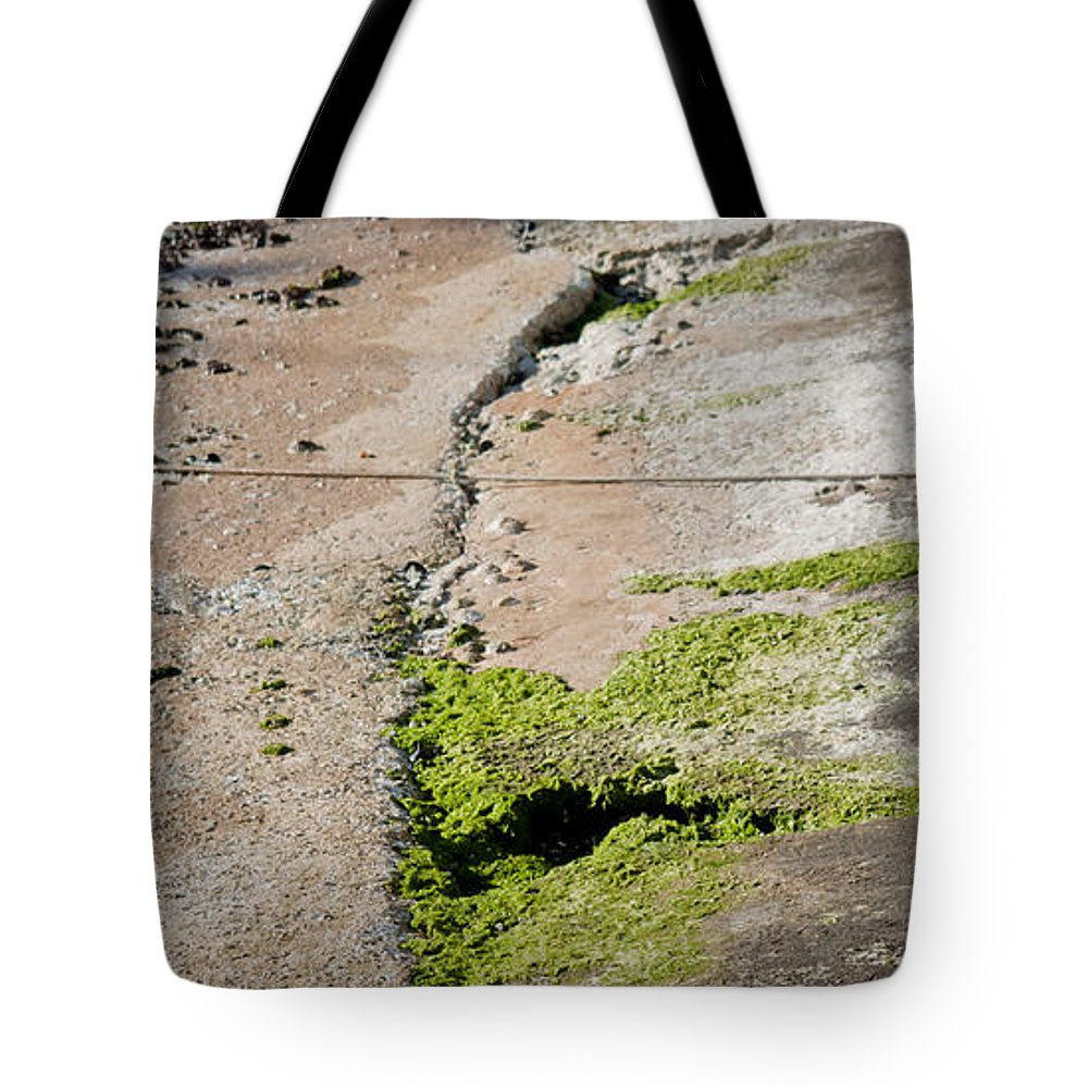 Sea Tote Bag featuring the photograph to swim or not to swim - A beautiful white duck ready to get into the sea or not by Pedro Cardona Llambias