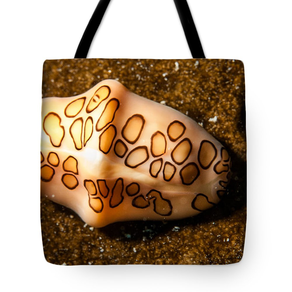 Belize Tote Bag featuring the photograph Flamingo Tongue On A Plate by Jean Noren