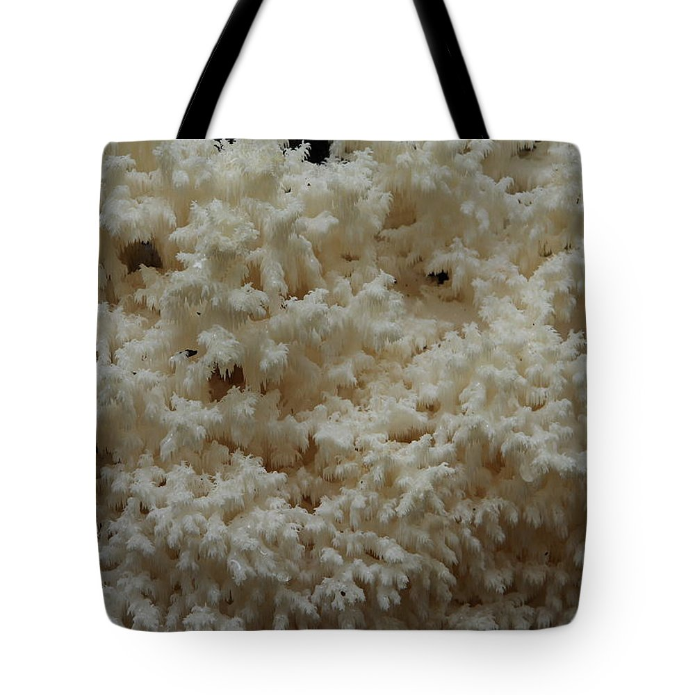 Hericium Coralloides Tote Bag featuring the photograph Tooth Fungus by Daniel Reed
