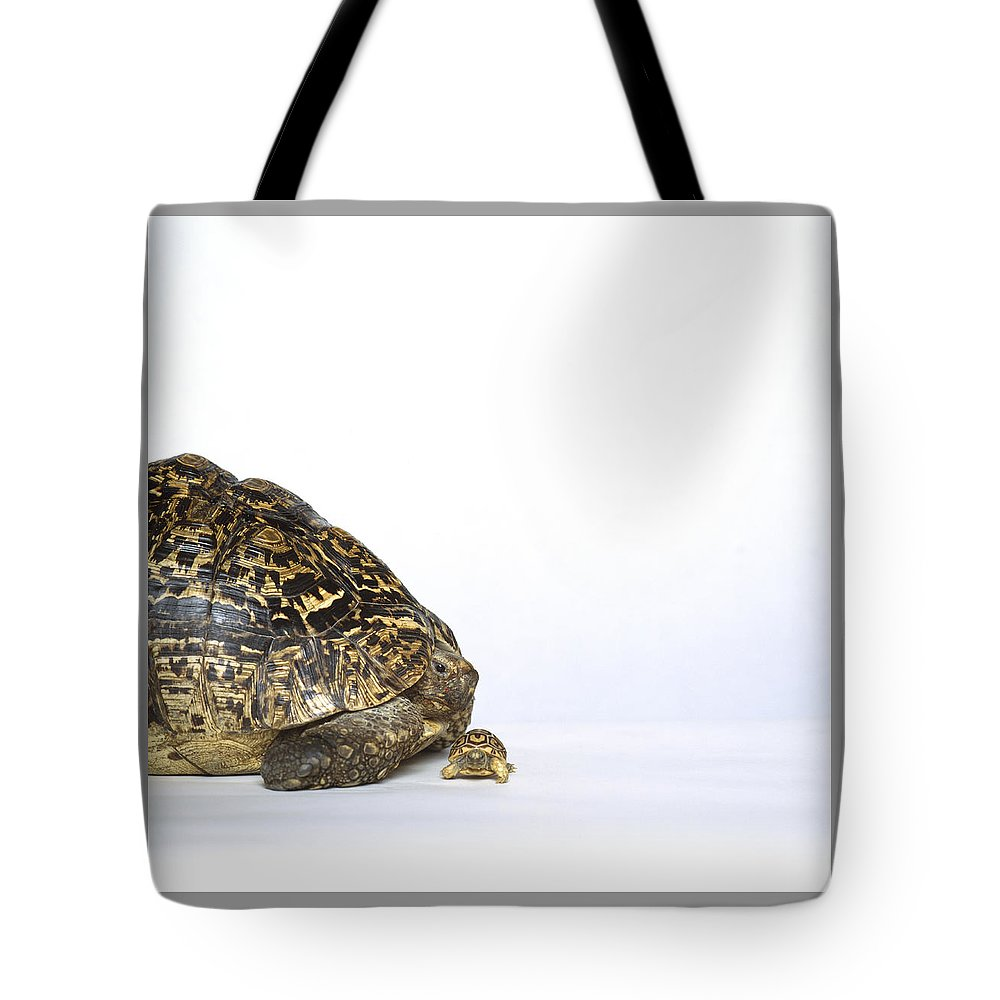 Tortoise Tote Bag featuring the photograph Tortoise Love by Shaun Higson