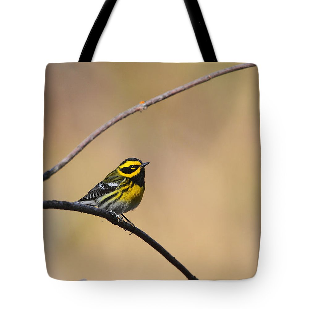 Doug Lloyd Tote Bag featuring the photograph Townsends Warbler by Doug Lloyd