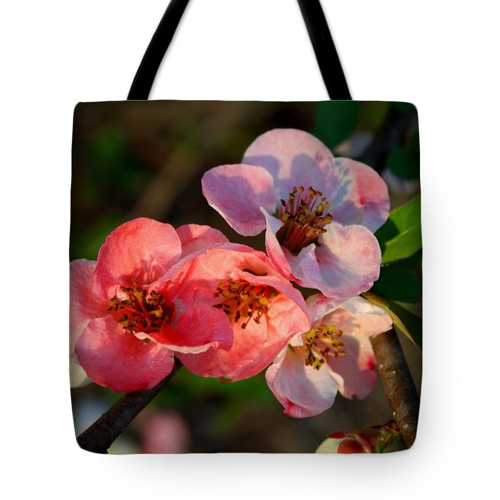 Quince Tote Bag featuring the photograph Toyo Nishiki Quince by Kathryn Meyer