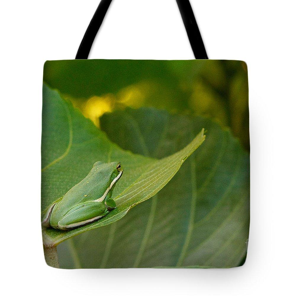 Amphibian Tote Bag featuring the photograph Treefrog Resting by Joe Elliott