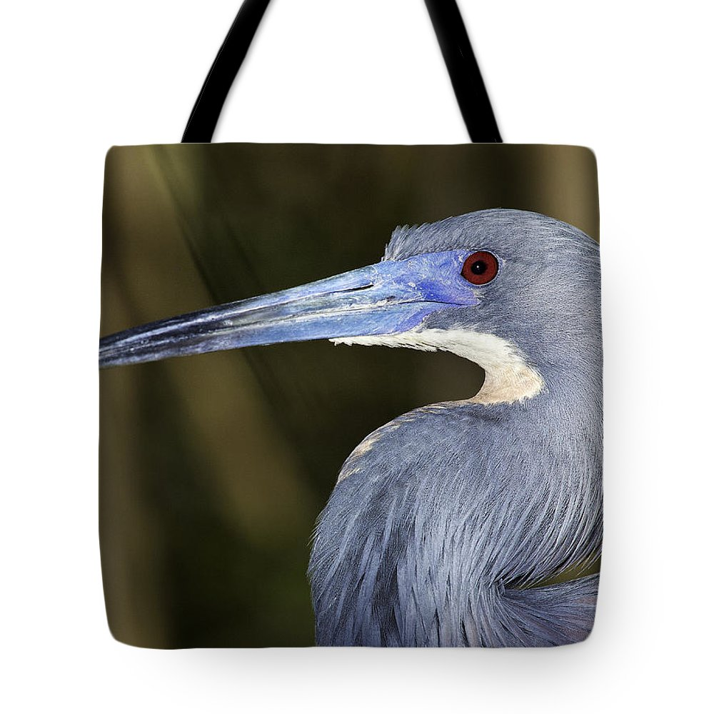 Bird Tote Bag featuring the photograph Tricolored Heron by Fran Gallogly