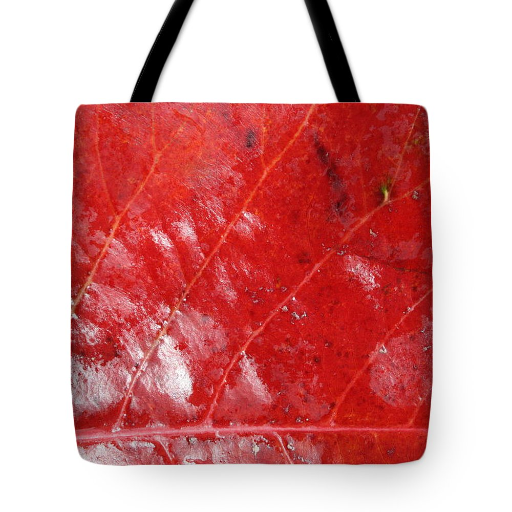 Jennifer Bright Art Tote Bag featuring the photograph Tropical Almond Leaf 3 by Jennifer Bright