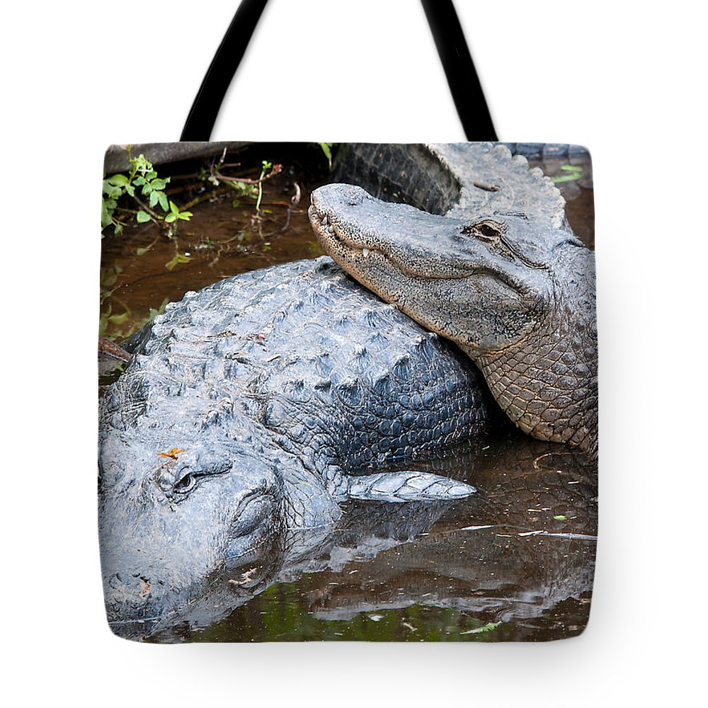 Wildlife Tote Bag featuring the photograph True Affection by Kenneth Albin