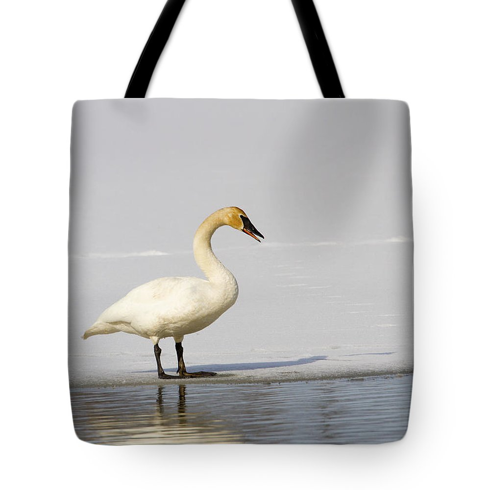 Doug Lloyd Tote Bag featuring the photograph Trumpeter Swan by Doug Lloyd