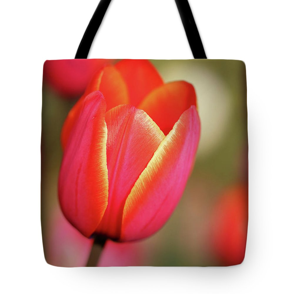 Tulips Tote Bag featuring the photograph Tulips Gone Wild by Rachel Cohen