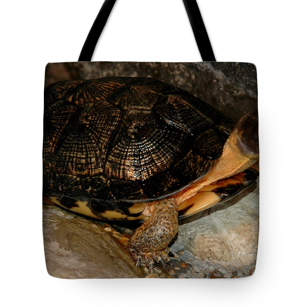 Usa Tote Bag featuring the photograph Turtle Time On The Rocks by LeeAnn McLaneGoetz McLaneGoetzStudioLLCcom