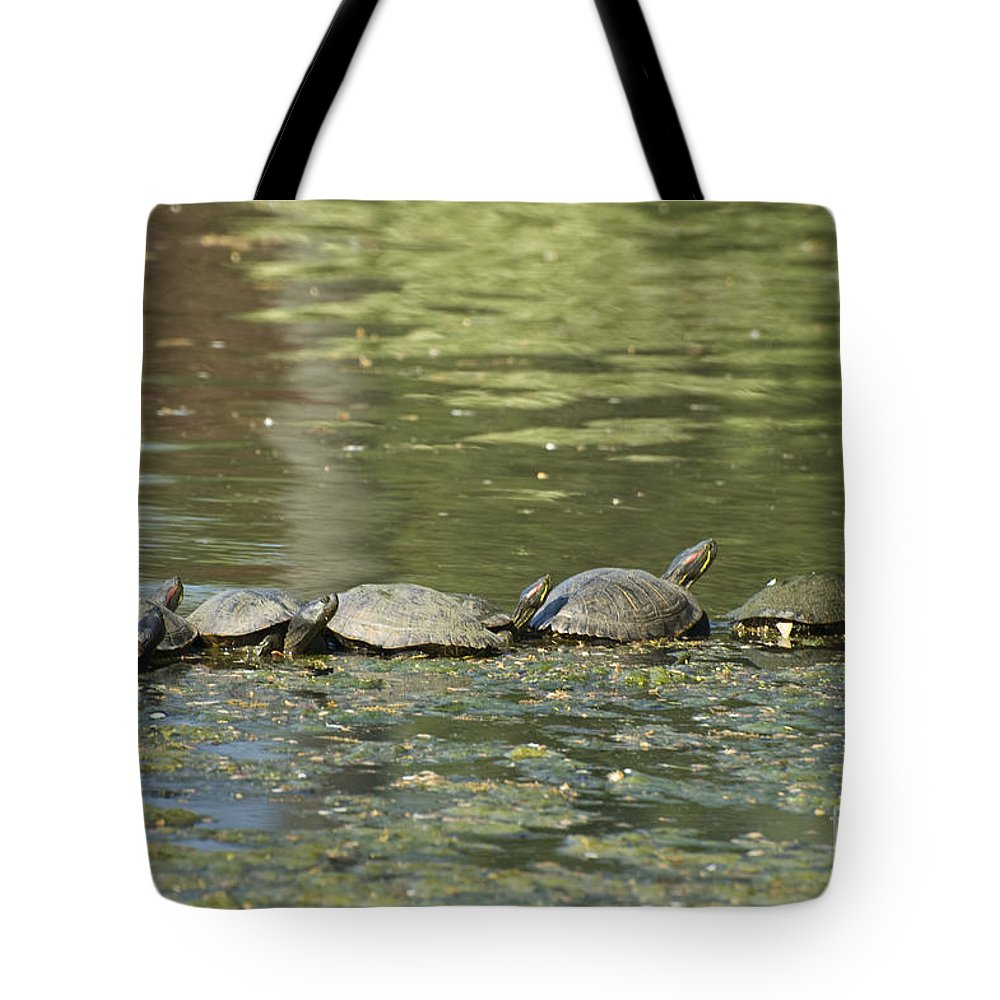 Turtles Tote Bag featuring the photograph Turtle Traffic Jam by Tim Mulina