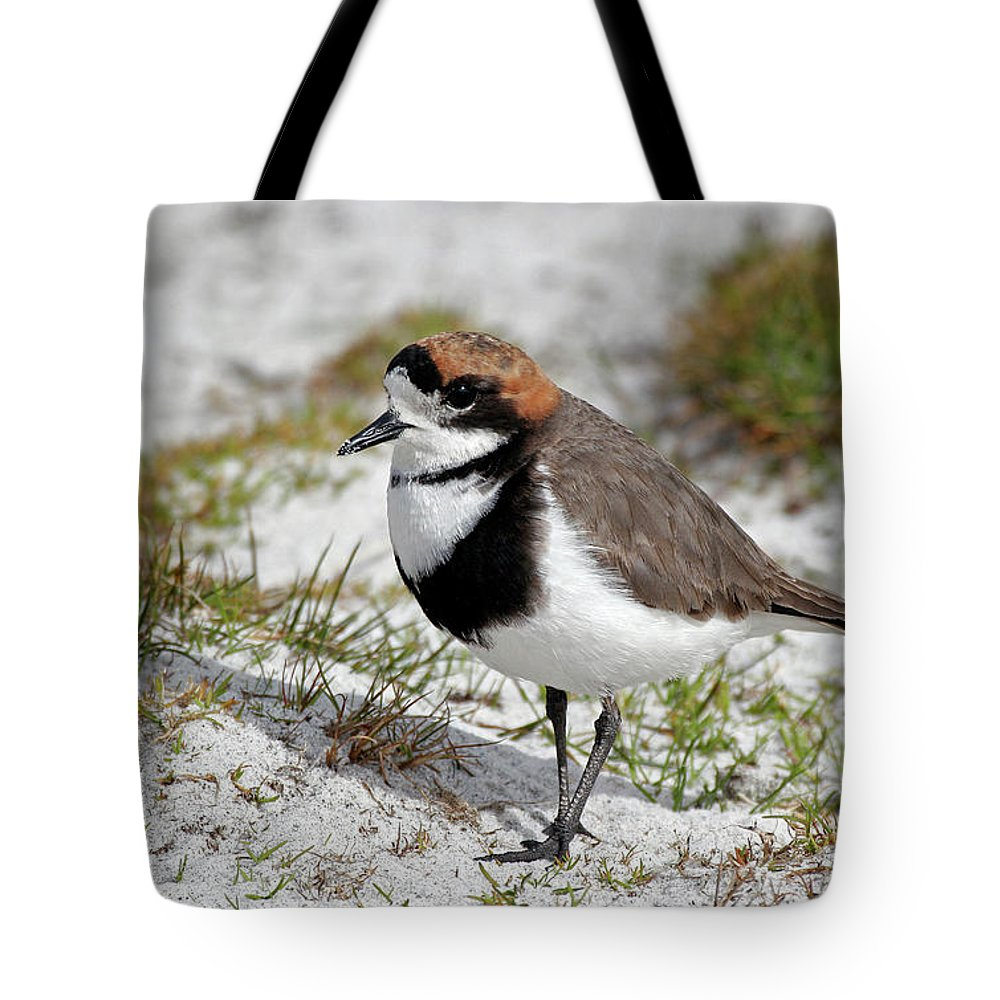 Flpa Tote Bag featuring the photograph Two-banded Plover Charadrius by Martin Withers