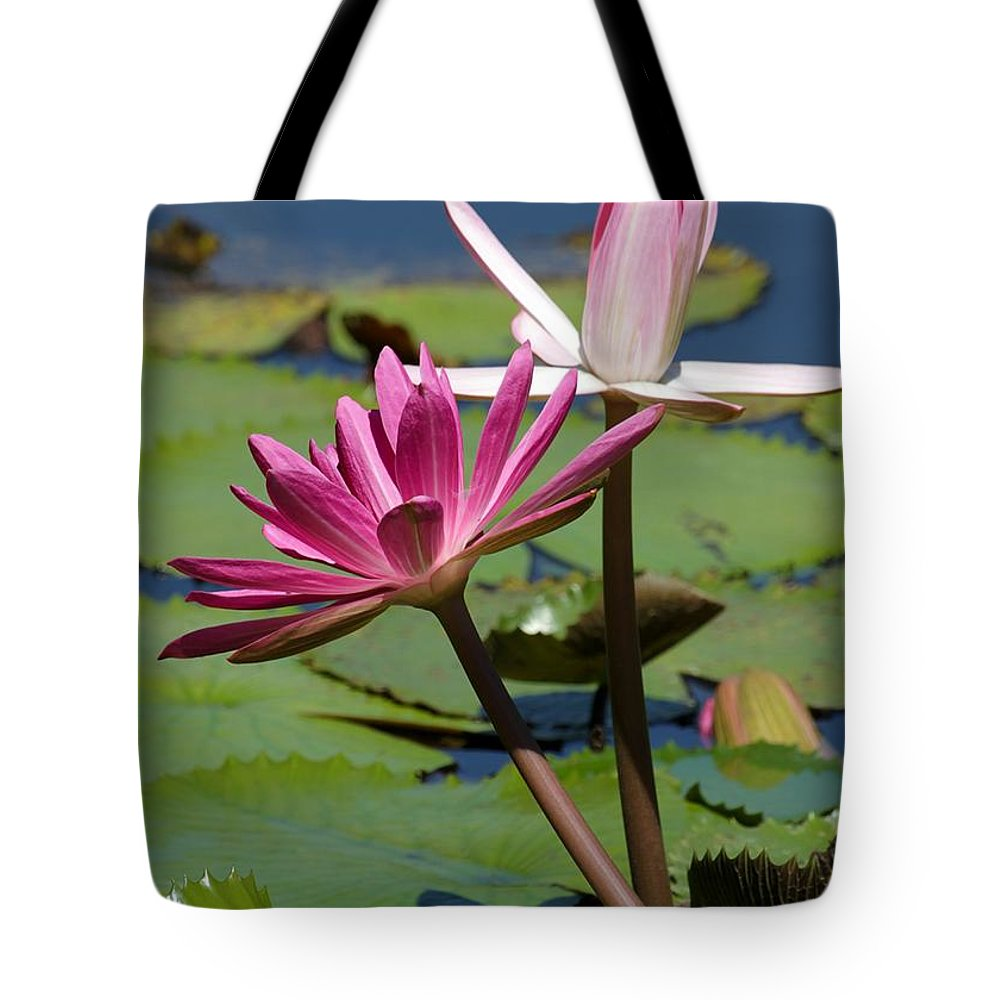 Pink Tote Bag featuring the photograph Two Graceful Water Lilies by Sabrina L Ryan