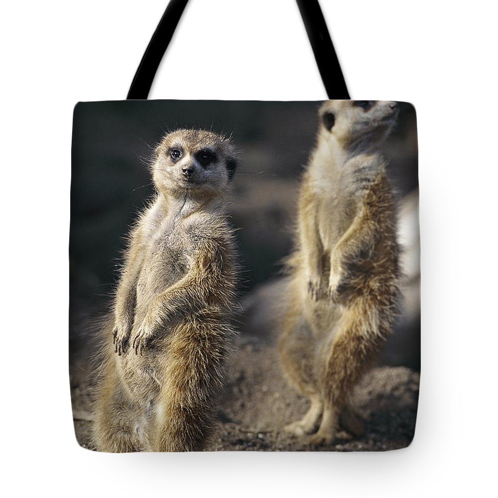 Africa Tote Bag featuring the photograph Two Meerkats, Suricata Suricatta, Stand by Nicole Duplaix