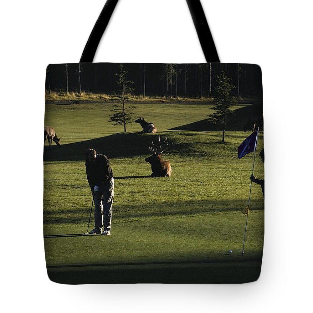 North America Tote Bag featuring the photograph Two People Play Golf While Elk Graze by Raymond Gehman