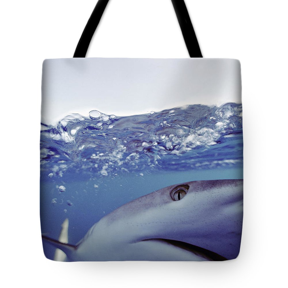 Pacific Islands Tote Bag featuring the photograph Underwater View Of Gray Reef Shark by Bill Curtsinger