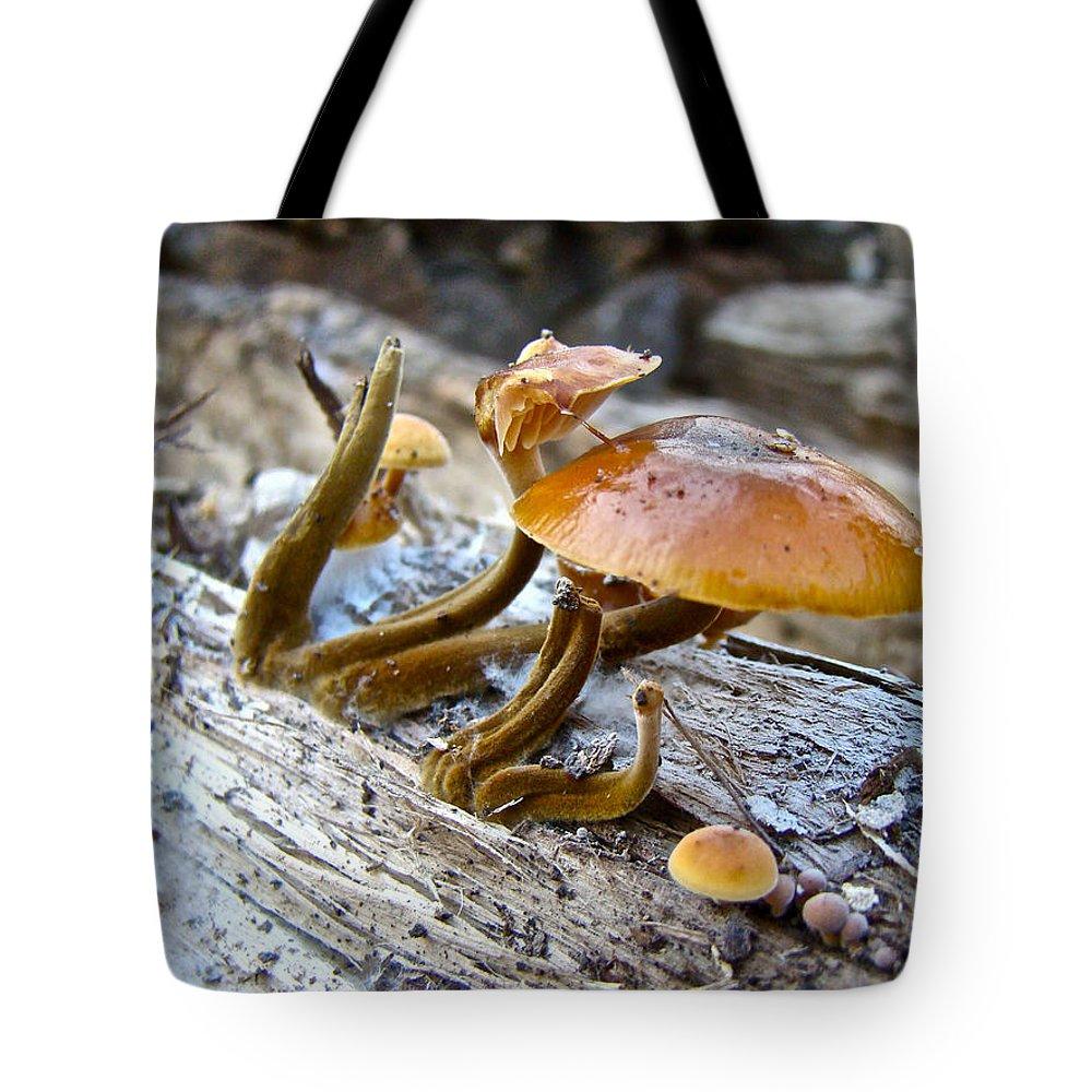 Mushroom Tote Bag featuring the photograph Velvet Foot Mushroom - Flammulina Velutipes by Mother Nature