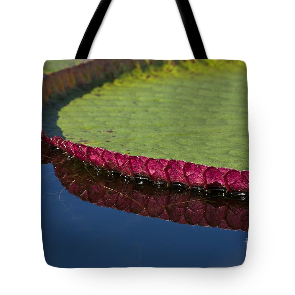Victoria Tote Bag featuring the photograph Victoria Amazonica Leaf by Heiko Koehrer-Wagner