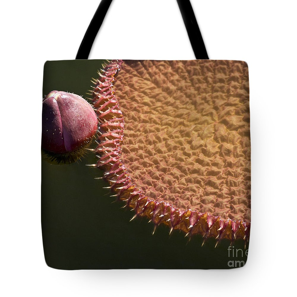 Victoria Tote Bag featuring the photograph Victoria Amazonica Budding by Heiko Koehrer-Wagner