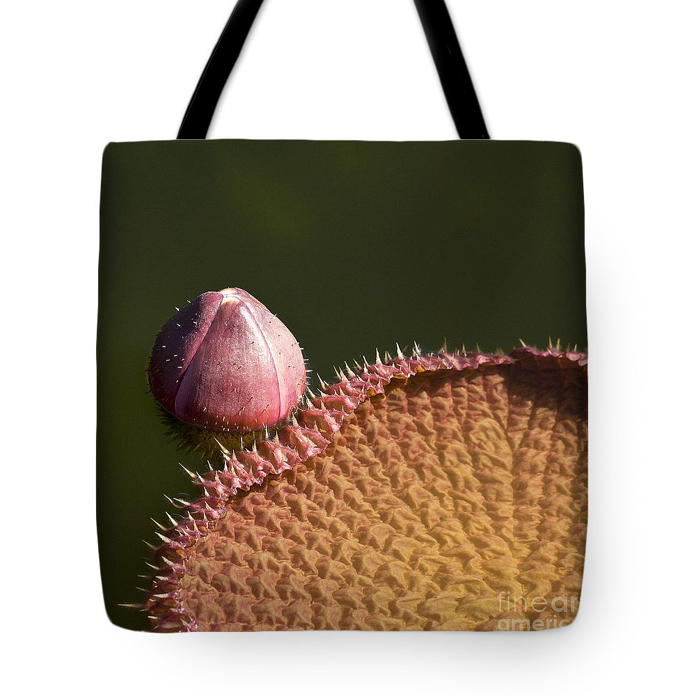 Victoria Tote Bag featuring the photograph Victoria Amazonica Bud And Leaf by Heiko Koehrer-Wagner