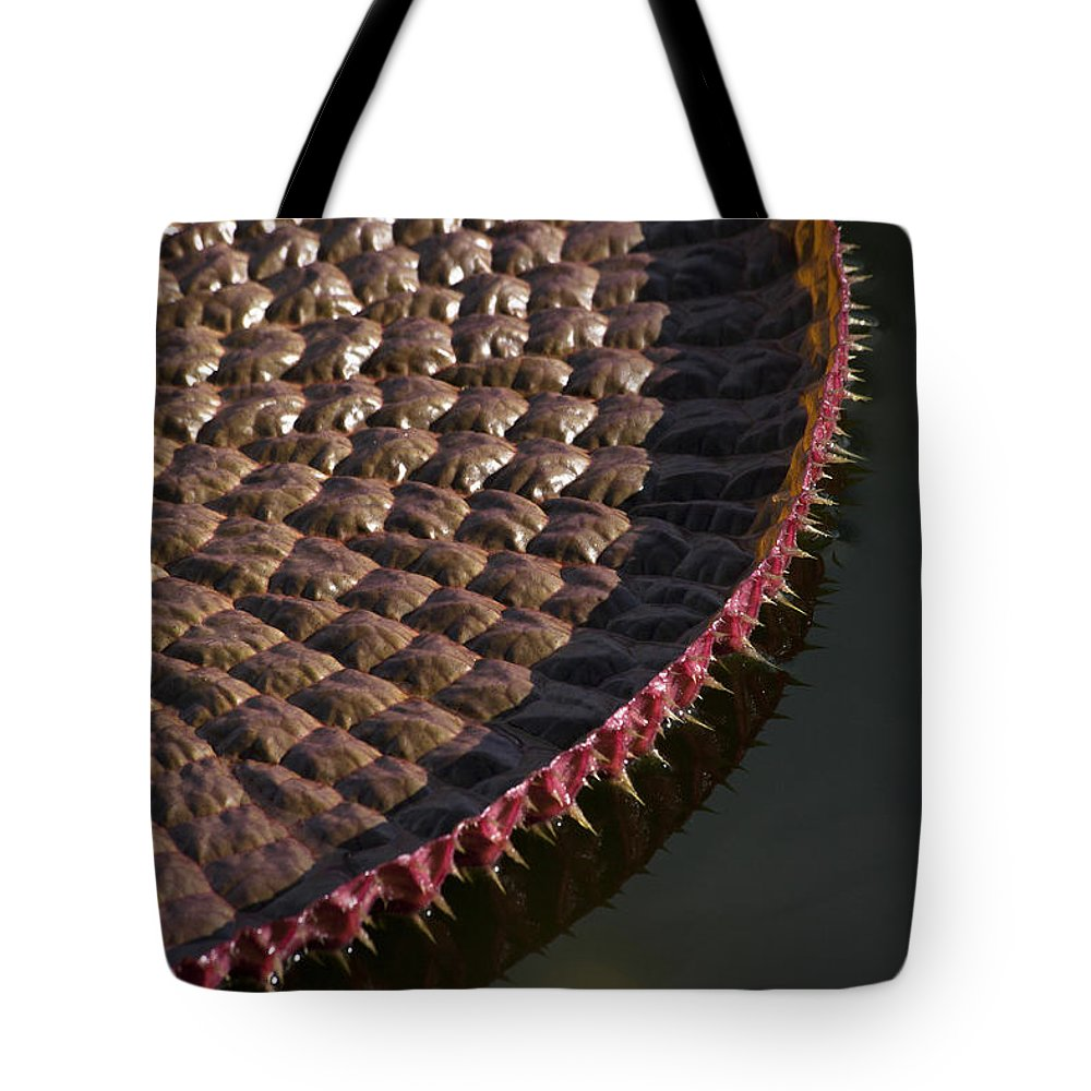Victoria Tote Bag featuring the photograph Victoria Amazonica Leaf Vertical by Heiko Koehrer-Wagner