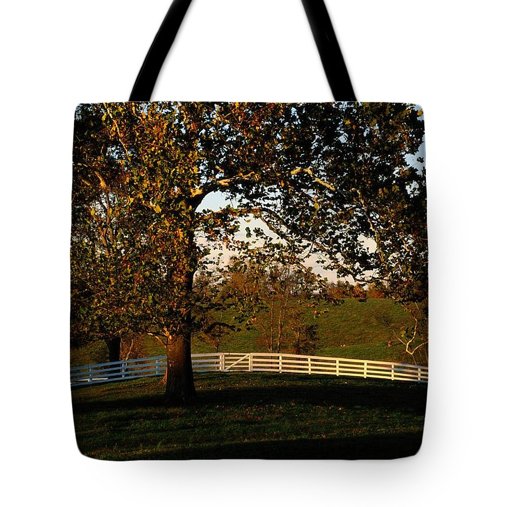 Pleasant Hill Tote Bag featuring the photograph View Of A Large Sycamore Tree And White by Raymond Gehman