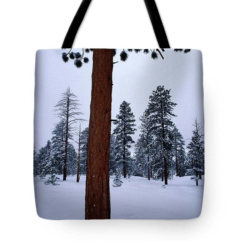 Ponderosa Pine Trees Tote Bag featuring the photograph View Of A Ponderosa Pine Surrounded by Raymond Gehman