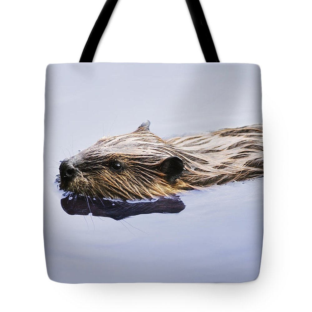 Animal Tote Bag featuring the photograph View Of Beaver, Chaudiere-appalaches by Yves Marcoux