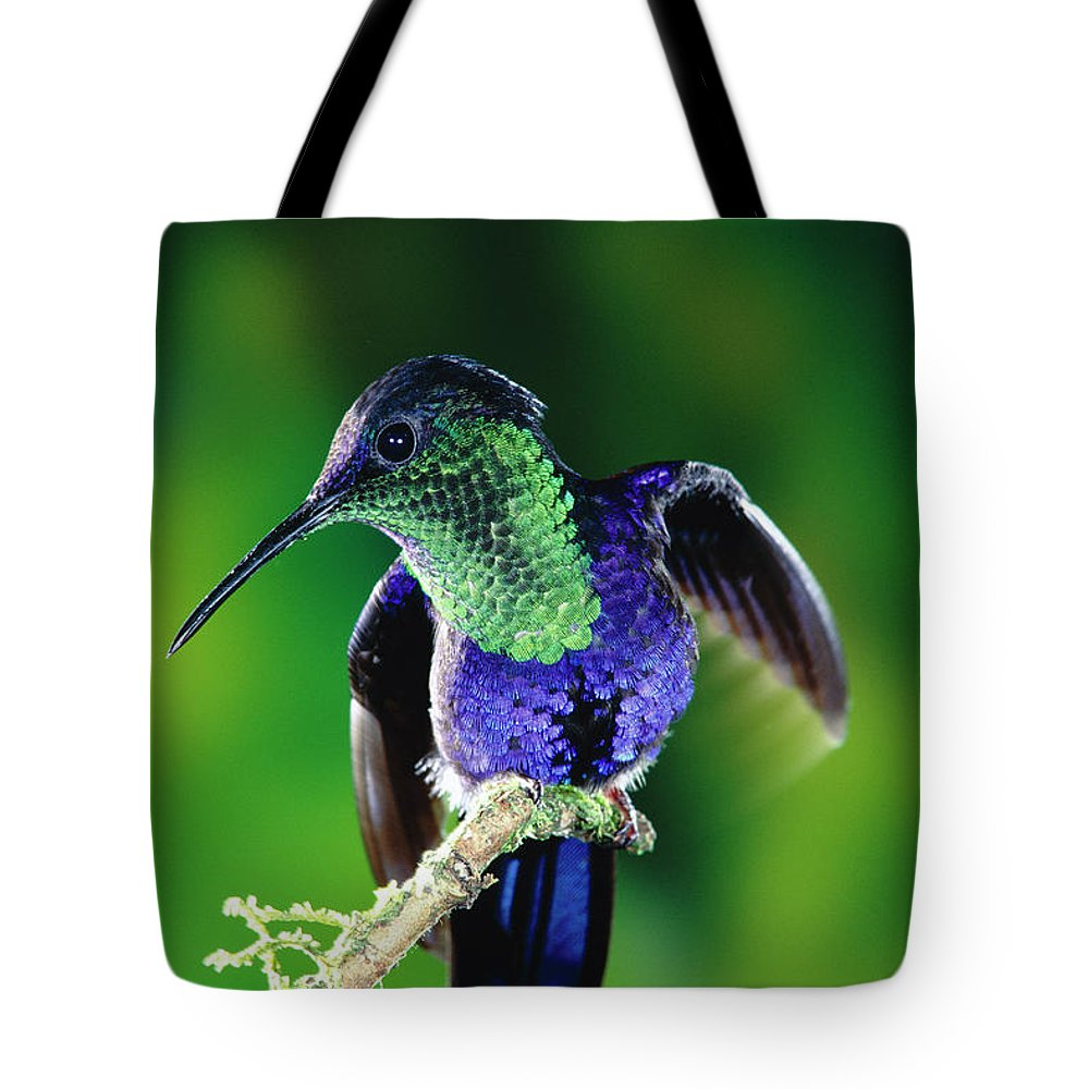 Mp Tote Bag featuring the photograph Violet-crowned Woodnymph Thalurania by Michael & Patricia Fogden