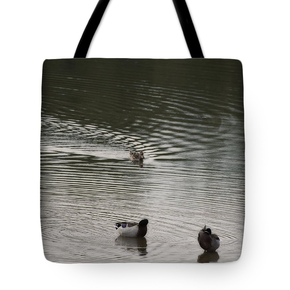 Ducks Tote Bag featuring the photograph Wait For Meeeee by Douglas Barnard
