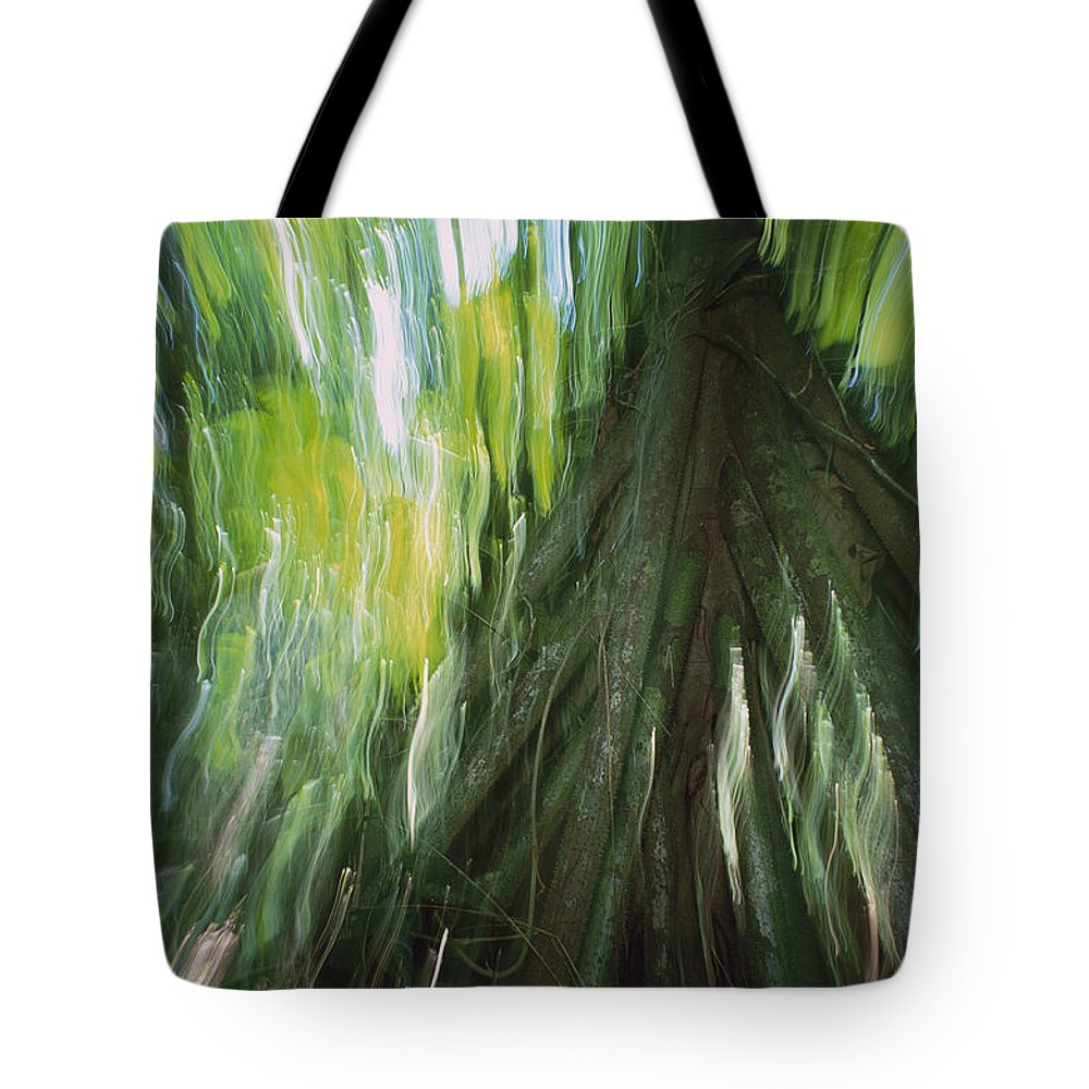 Mp Tote Bag featuring the photograph Walking Palm Tree Abstract by Christian Ziegler