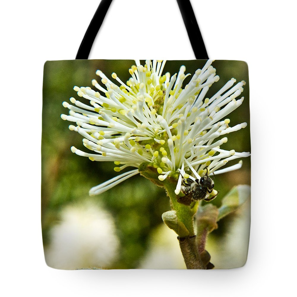 Fothergilla Tote Bag featuring the photograph Wasp On Fothergilla 1 by Douglas Barnett