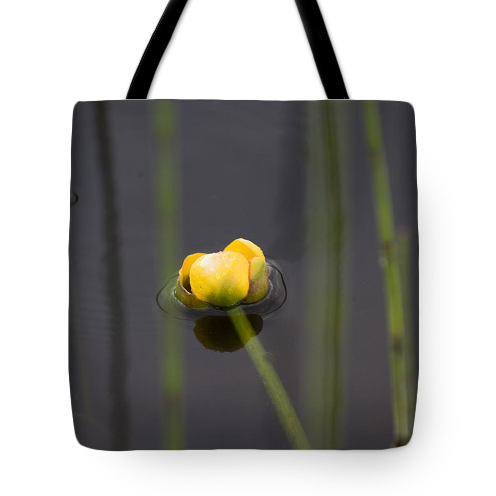 Water Tote Bag featuring the photograph Water Lily by Mark Duffy
