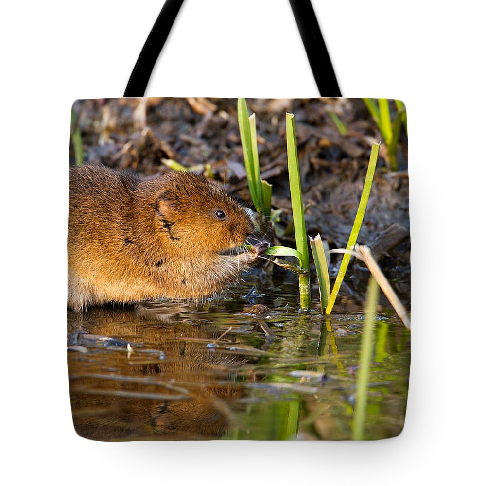Water Vole Tote Bag featuring the photograph Water Vole At Dusk by Bob Kemp
