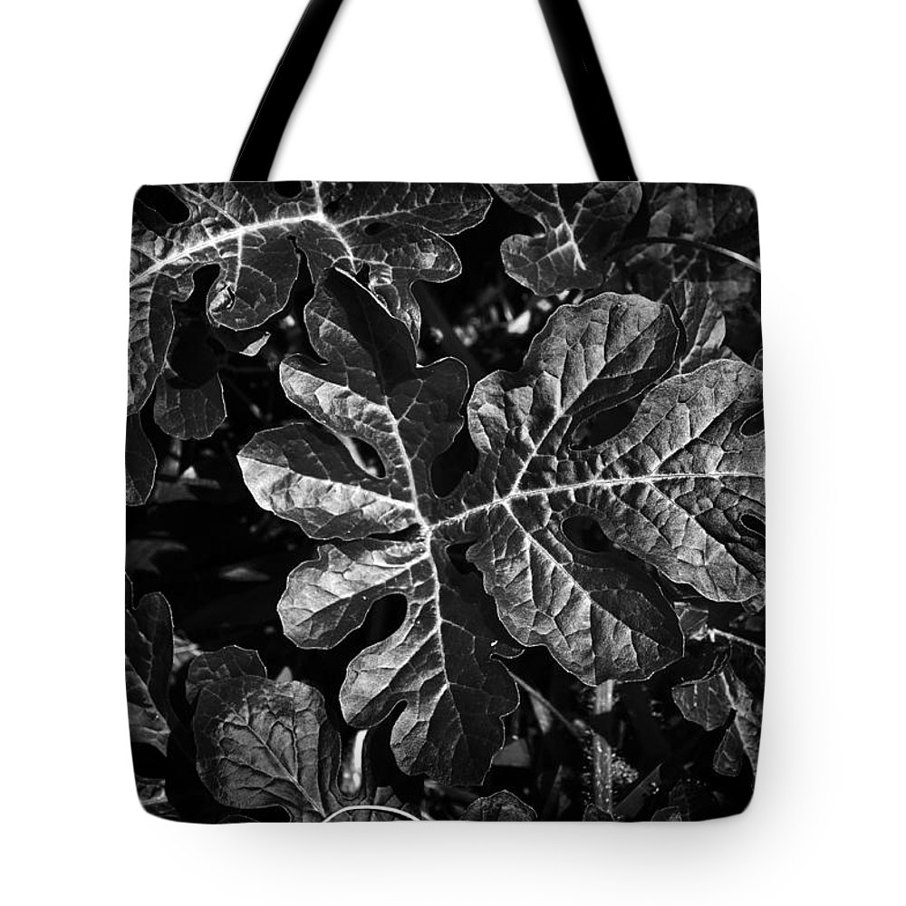 Watermelon Tote Bag featuring the photograph Watermelon Leaves by Tom Bell