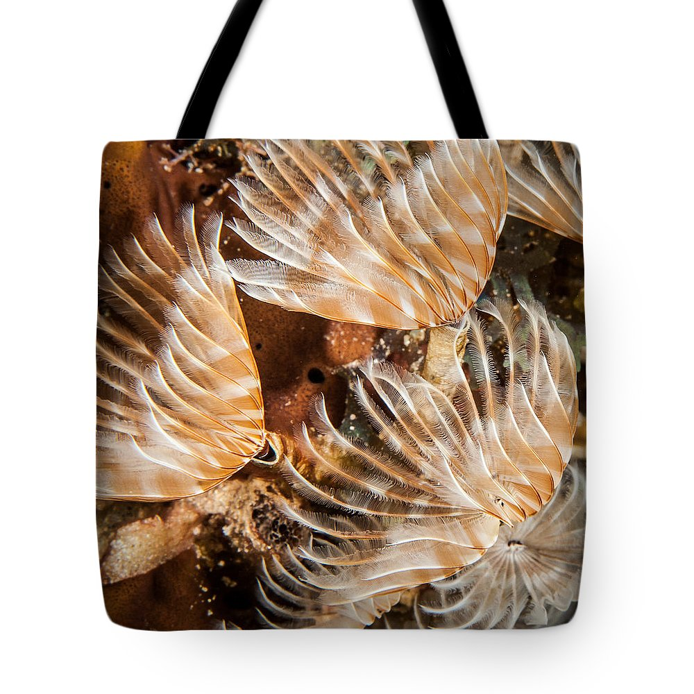 Belize Tote Bag featuring the photograph Waving In The Current by Jean Noren