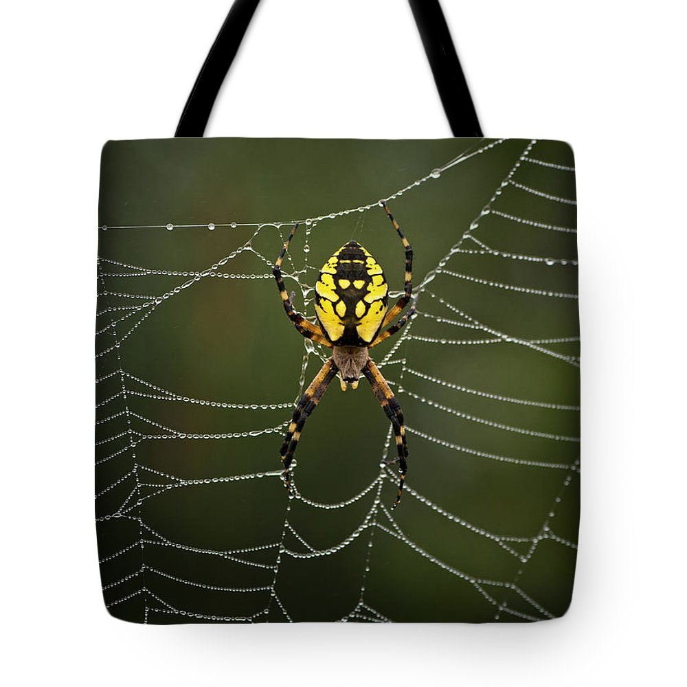 Spider Tote Bag featuring the photograph Weave Master by Susan Capuano