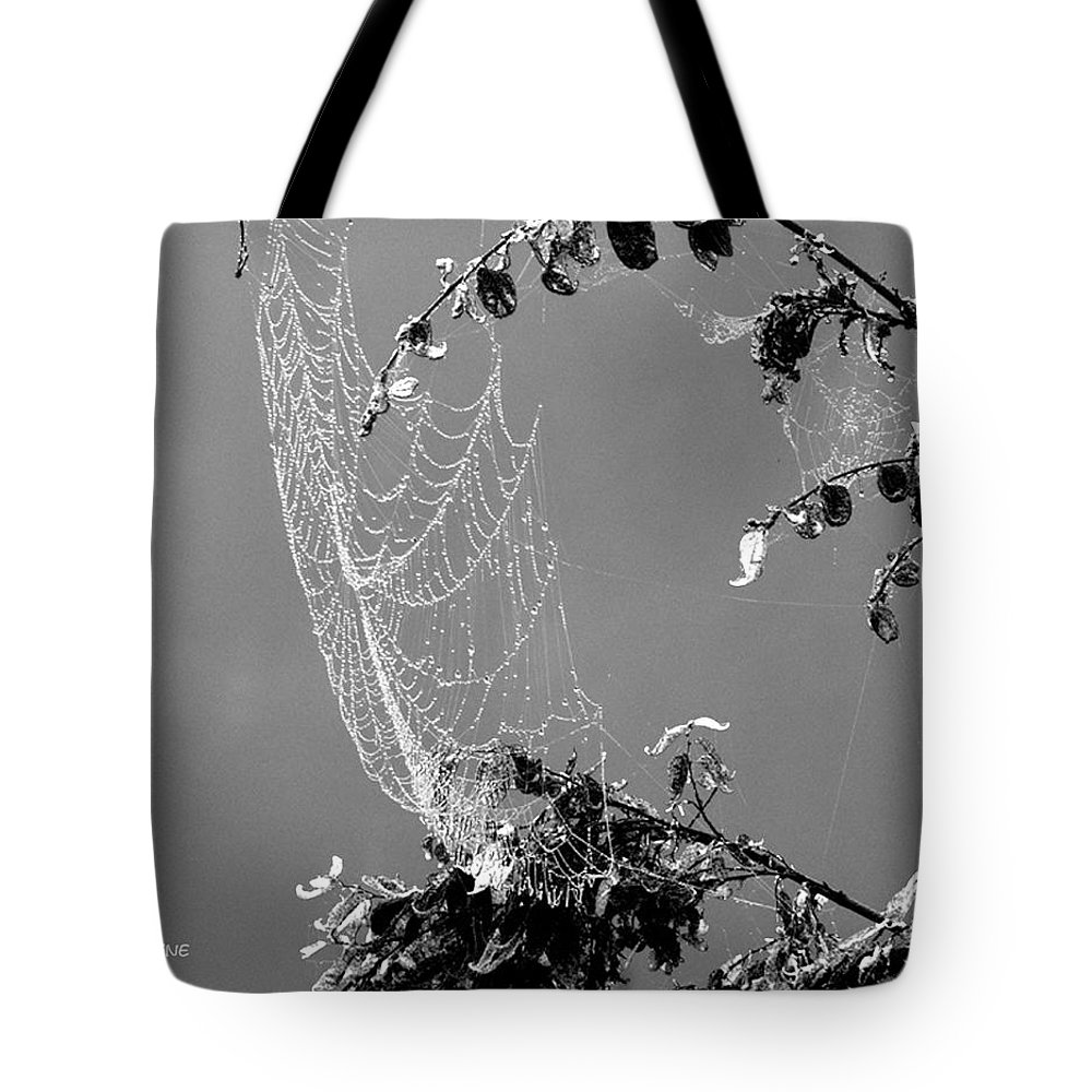 Web Tote Bag featuring the photograph Web In The Rain B-w by Ericamaxine Price
