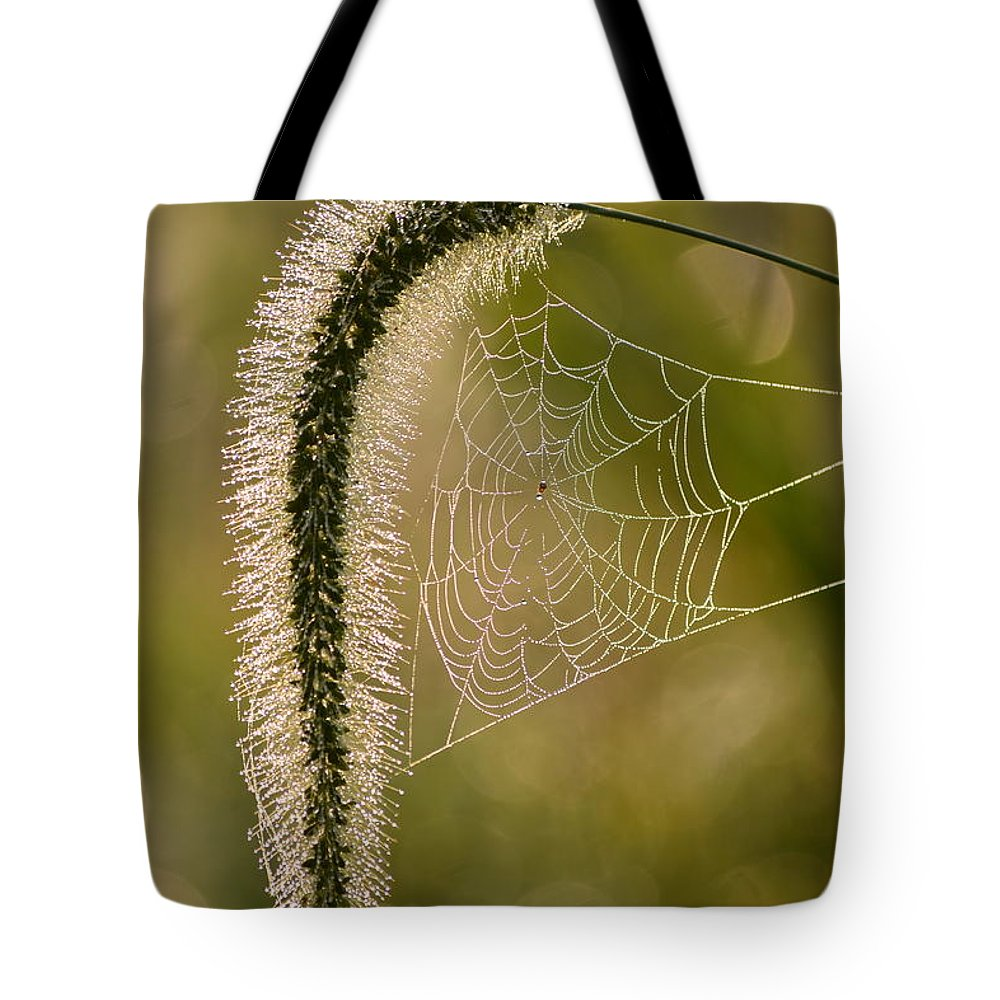 Foxtail Tote Bag featuring the photograph Webbed Tail by JD Grimes