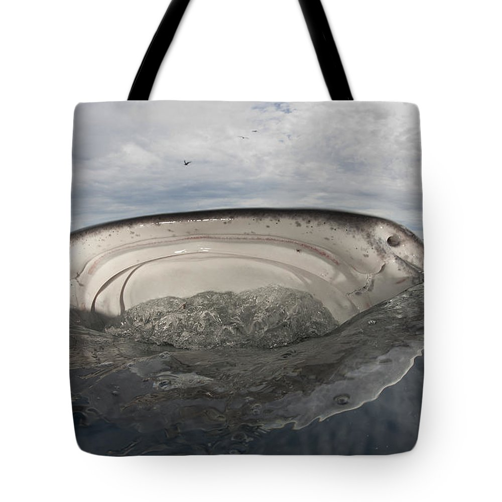 Front View Tote Bag featuring the photograph Whale Shark Feeding By Fishing by Steve Jones