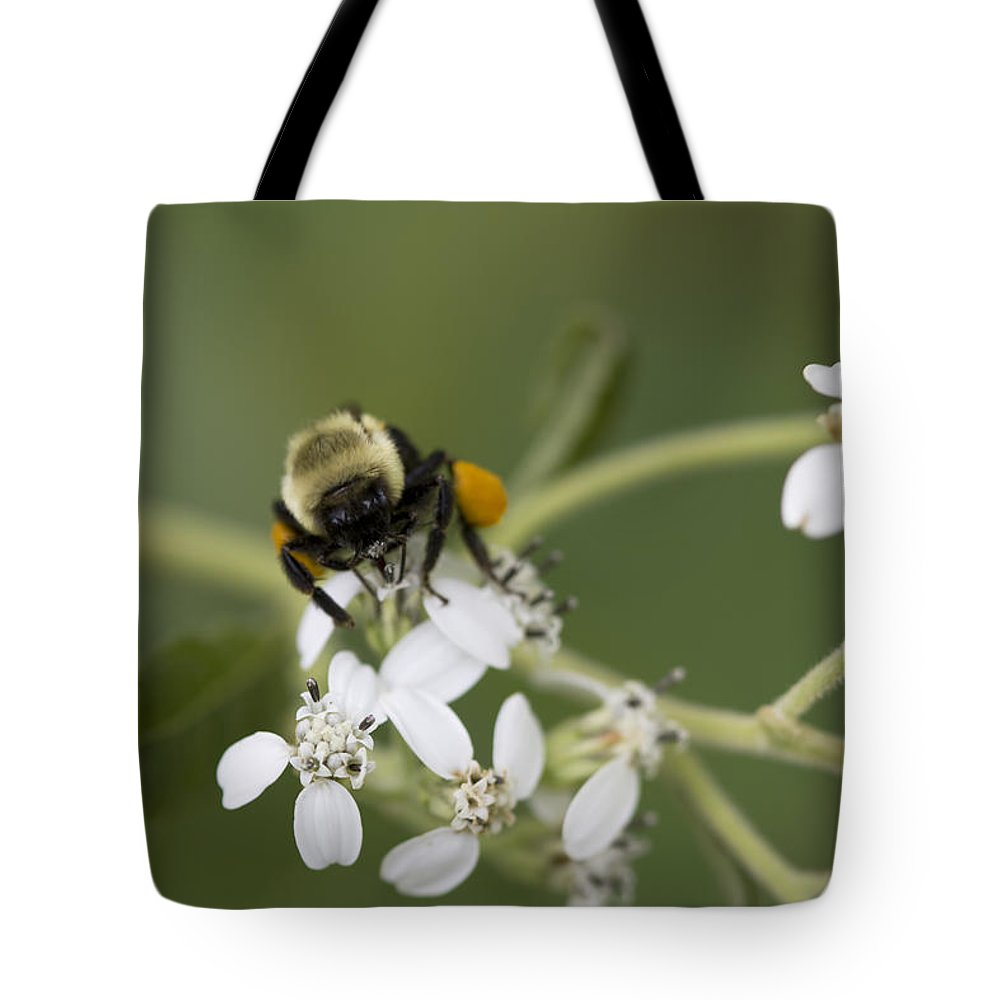White Crownbeard Tote Bag featuring the photograph White Crownbeard Wildflowers Pollinated By A Bumble Bee With His Bags Packed by Kathy Clark