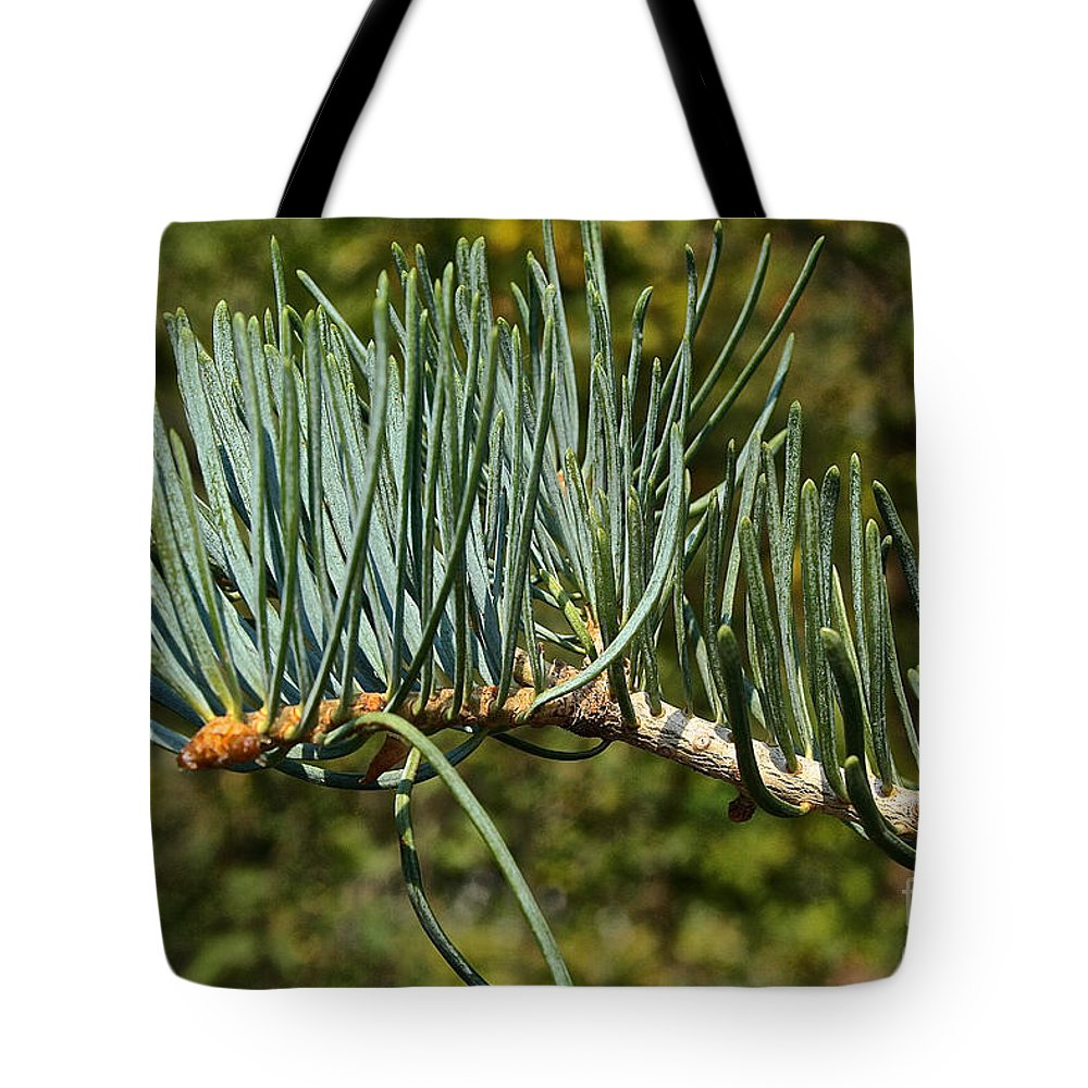Outdoors Tote Bag featuring the photograph White Fir by Susan Herber