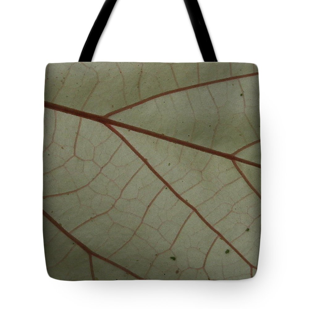 Jennifer Bright Art Tote Bag featuring the photograph White Hau Leaf With Red Veins by Jennifer Bright