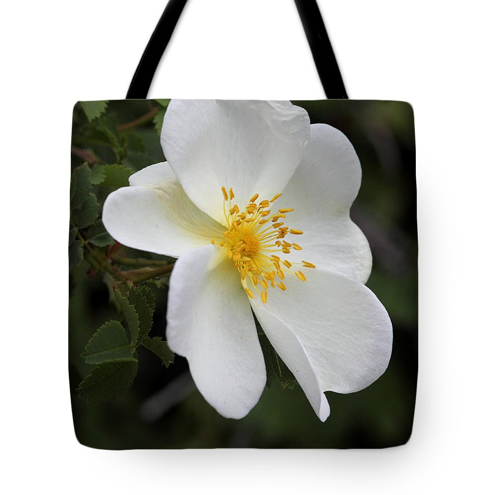 Doug Lloyd Tote Bag featuring the photograph White Rose by Doug Lloyd