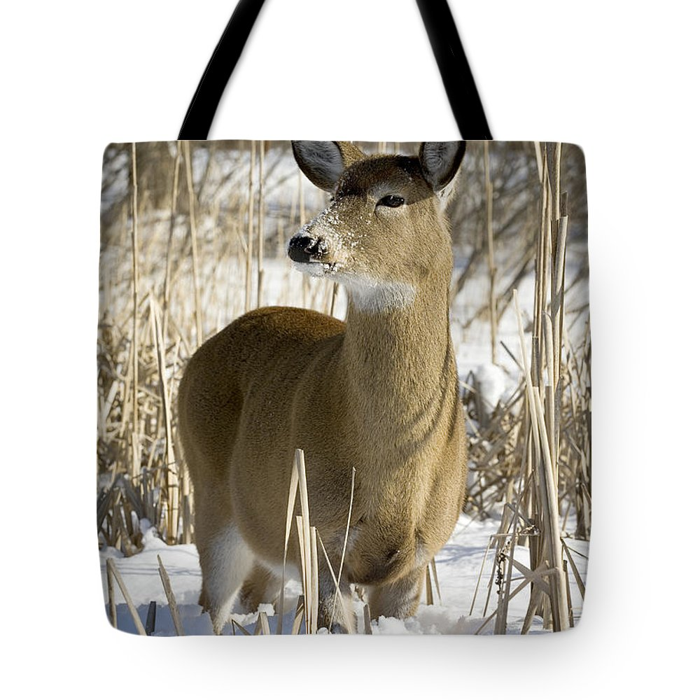 Chilly Tote Bag featuring the photograph White-tailed Deer In A Snow-covered by Philippe Henry