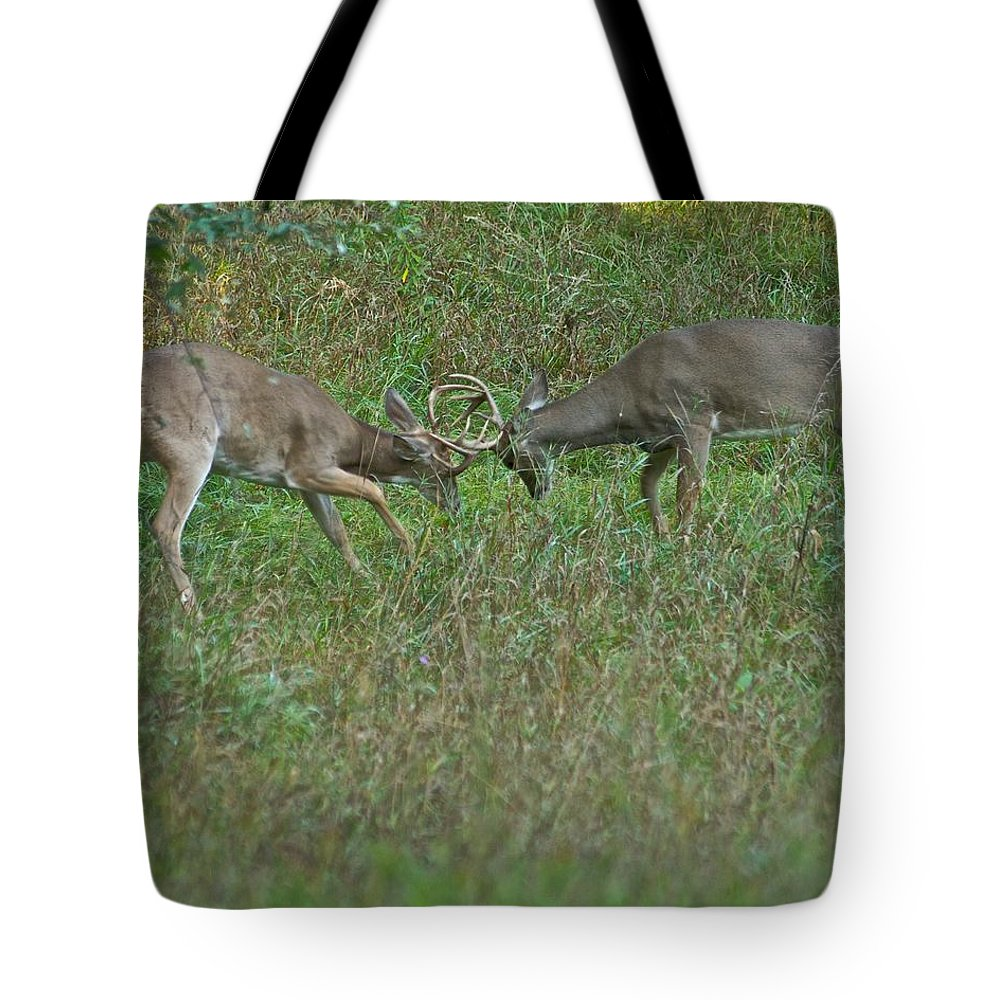 American Tote Bag featuring the photograph Whitetail Fighting_9668 by Michael Peychich
